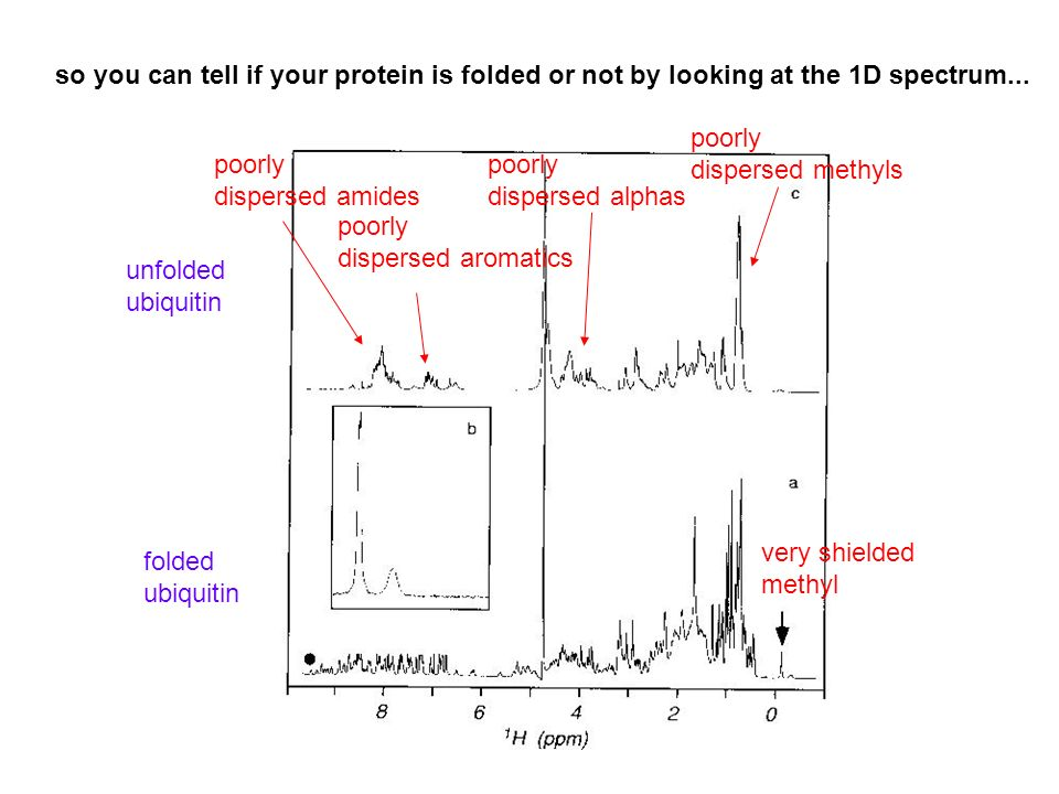 so you can tell if your protein is folded or not by looking at the 1D spectrum...