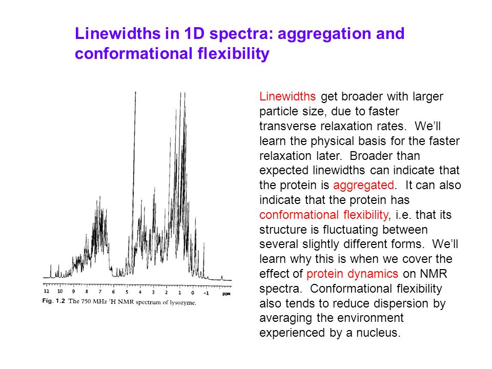 Linewidths in 1D spectra: aggregation and conformational flexibility