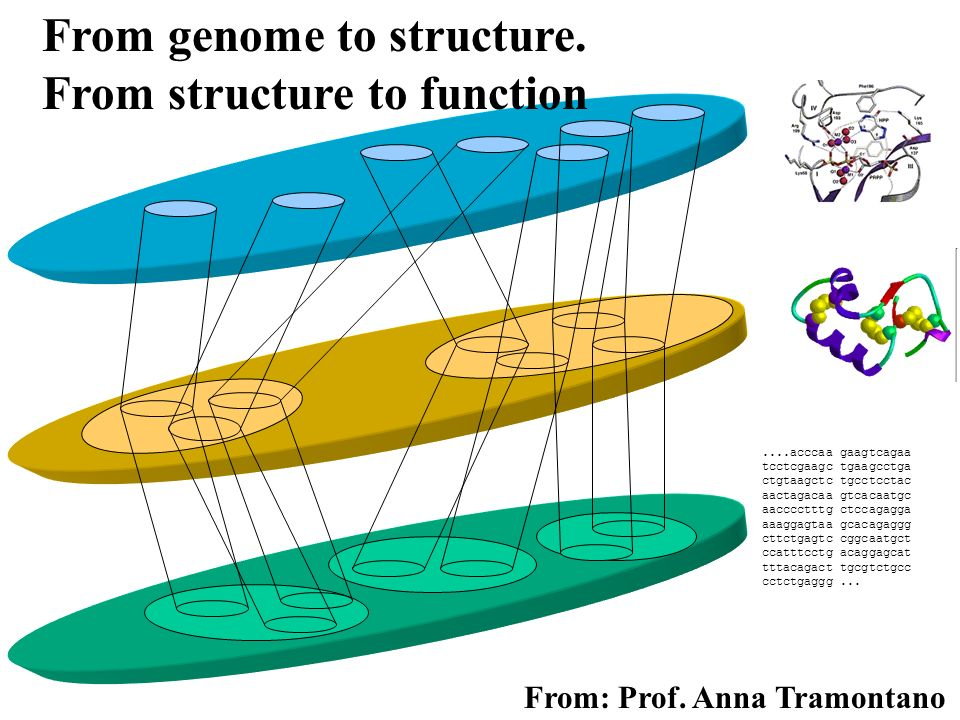 From genome to structure. From structure to function