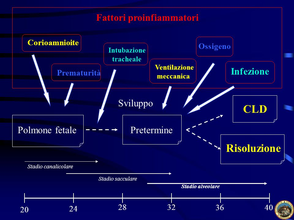 CLD Risoluzione Fattori proinfiammatori Infezione Sviluppo
