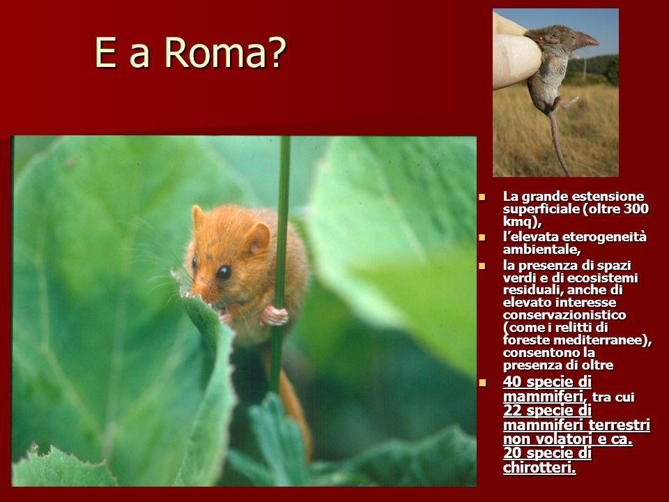 E a Roma La grande estensione superficiale (oltre 300 kmq), l'elevata eterogeneità ambientale,