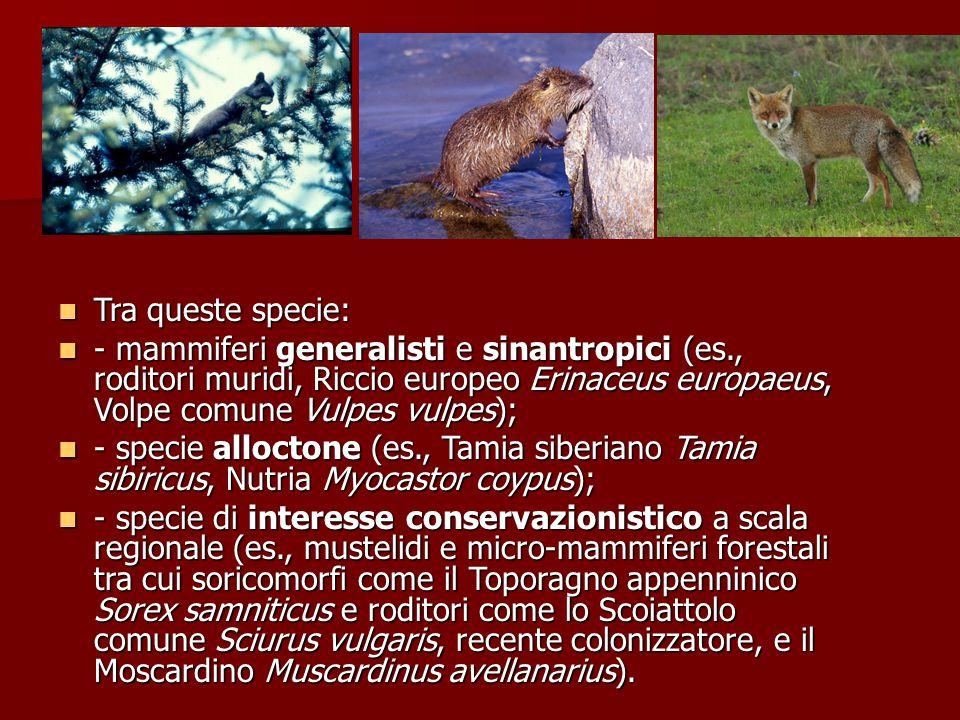Tra queste specie: - mammiferi generalisti e sinantropici (es., roditori muridi, Riccio europeo Erinaceus europaeus, Volpe comune Vulpes vulpes);