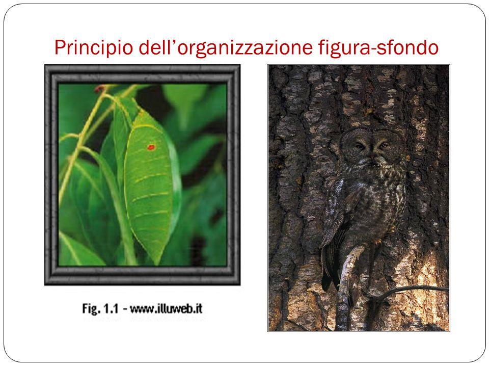 Principio dell'organizzazione figura-sfondo