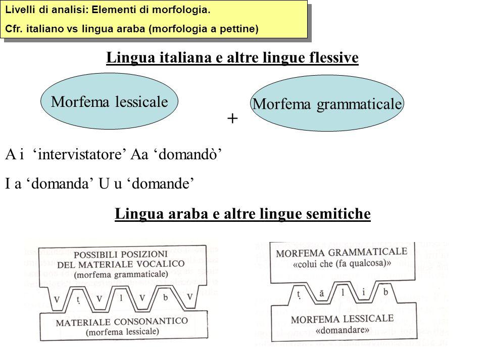 + Lingua italiana e altre lingue flessive Morfema lessicale