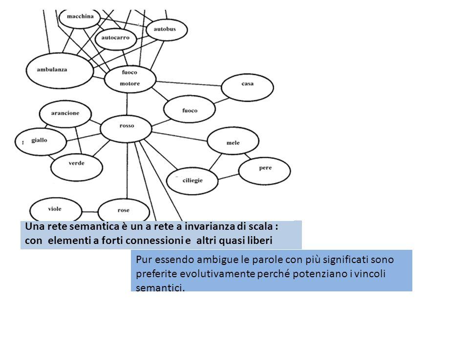Una rete semantica è un a rete a invarianza di scala : con elementi a forti connessioni e altri quasi liberi