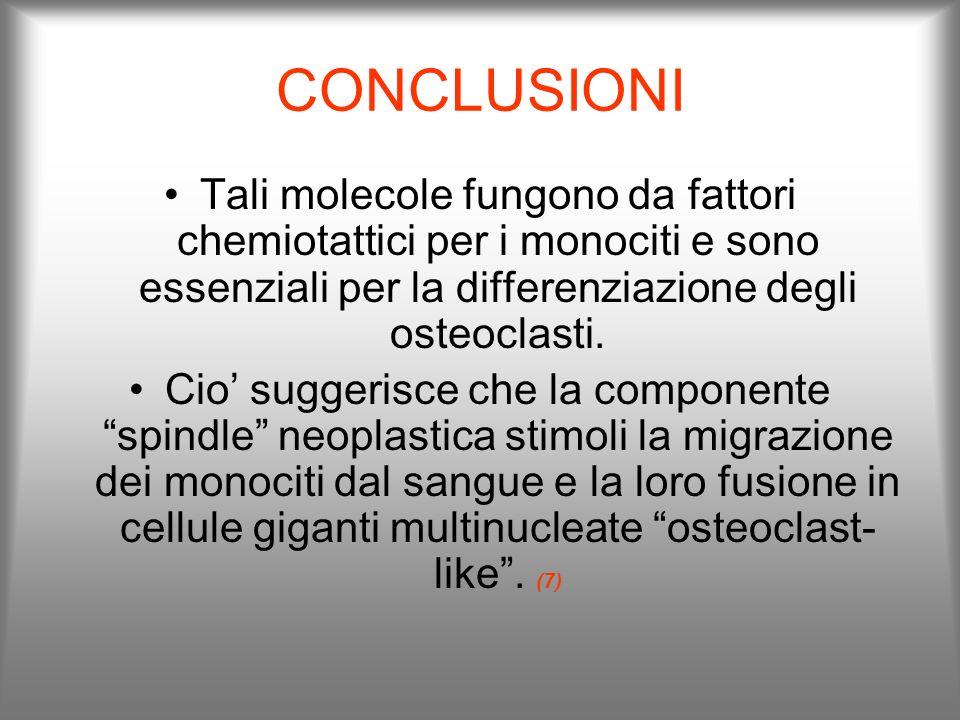 CONCLUSIONI Tali molecole fungono da fattori chemiotattici per i monociti e sono essenziali per la differenziazione degli osteoclasti.