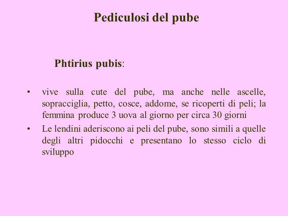 Pediculosi del pube Phtirius pubis: