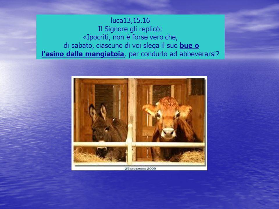 Il Signore gli replicò: «Ipocriti, non è forse vero che,