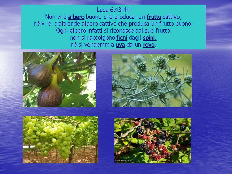 non si raccolgono fichi dagli spini, né si vendemmia uva da un rovo.