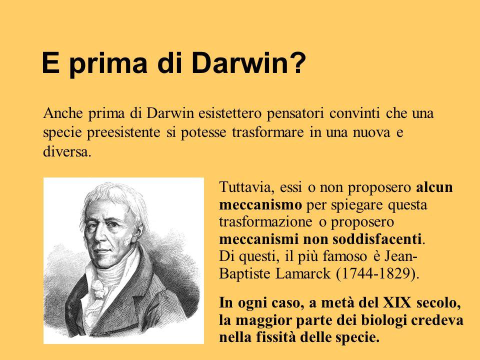 E prima di Darwin Anche prima di Darwin esistettero pensatori convinti che una specie preesistente si potesse trasformare in una nuova e diversa.