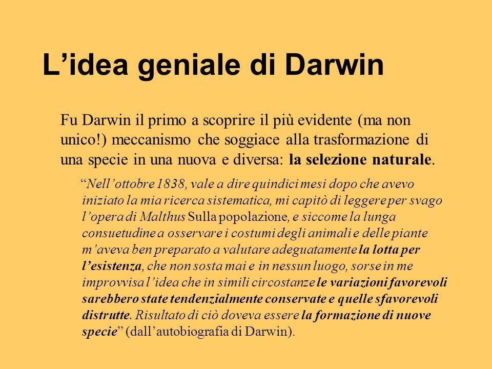 L'idea geniale di Darwin