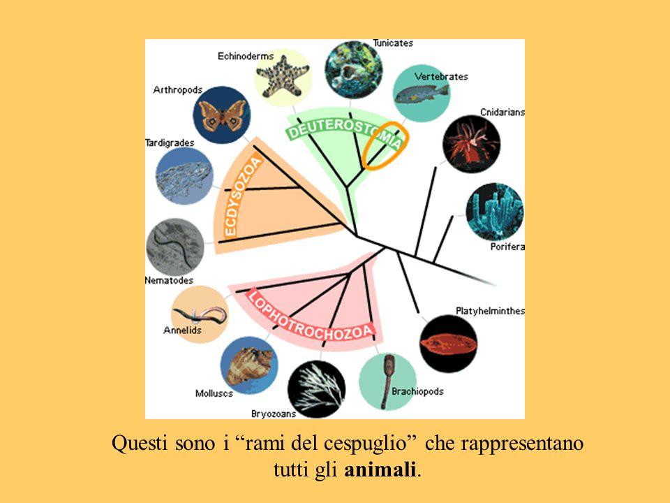 Questi sono i rami del cespuglio che rappresentano tutti gli animali.