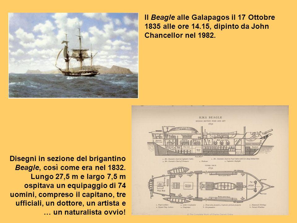 Il Beagle alle Galapagos il 17 Ottobre 1835 alle ore 14