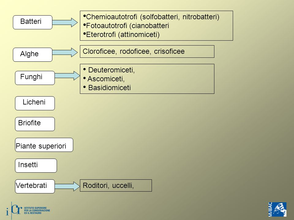 Chemioautotrofi (solfobatteri, nitrobatteri)