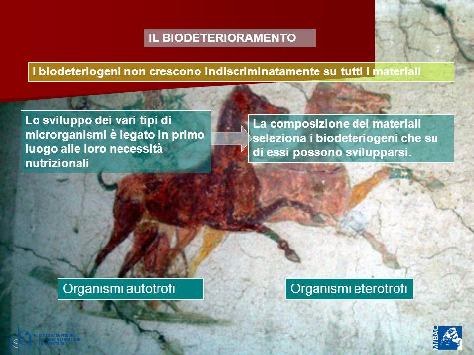 Organismi autotrofi Organismi eterotrofi IL BIODETERIORAMENTO