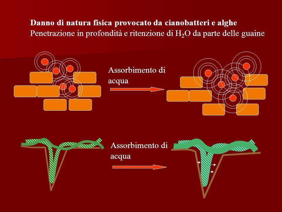 Danno di natura fisica provocato da cianobatteri e alghe