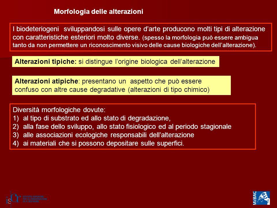 Morfologia delle alterazioni