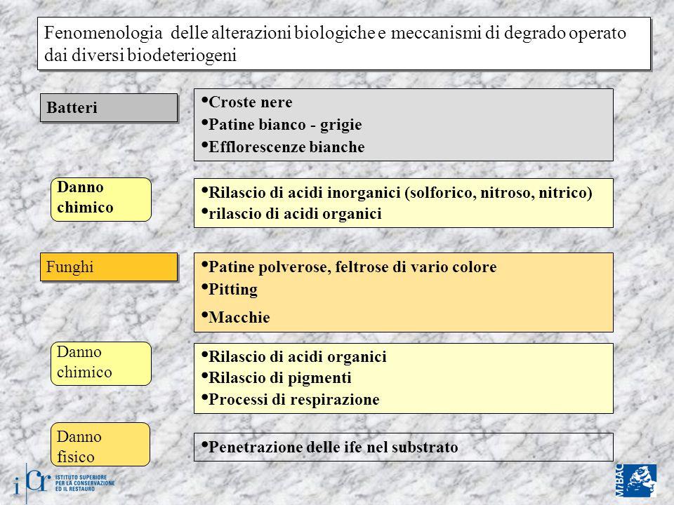 Fenomenologia delle alterazioni biologiche e meccanismi di degrado operato dai diversi biodeteriogeni