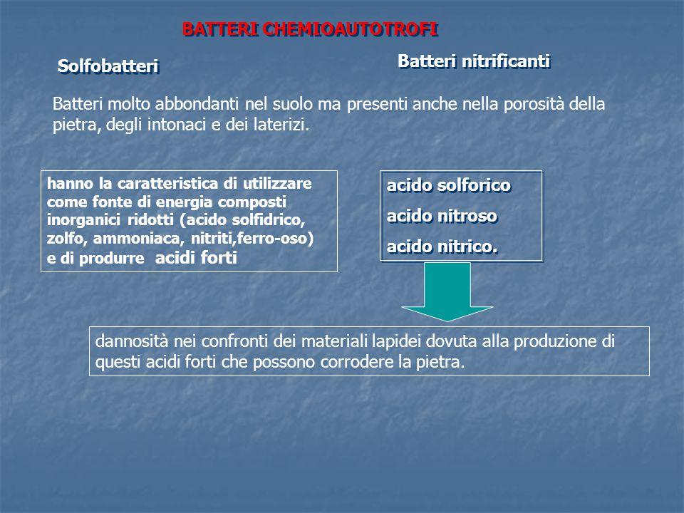 BATTERI CHEMIOAUTOTROFI