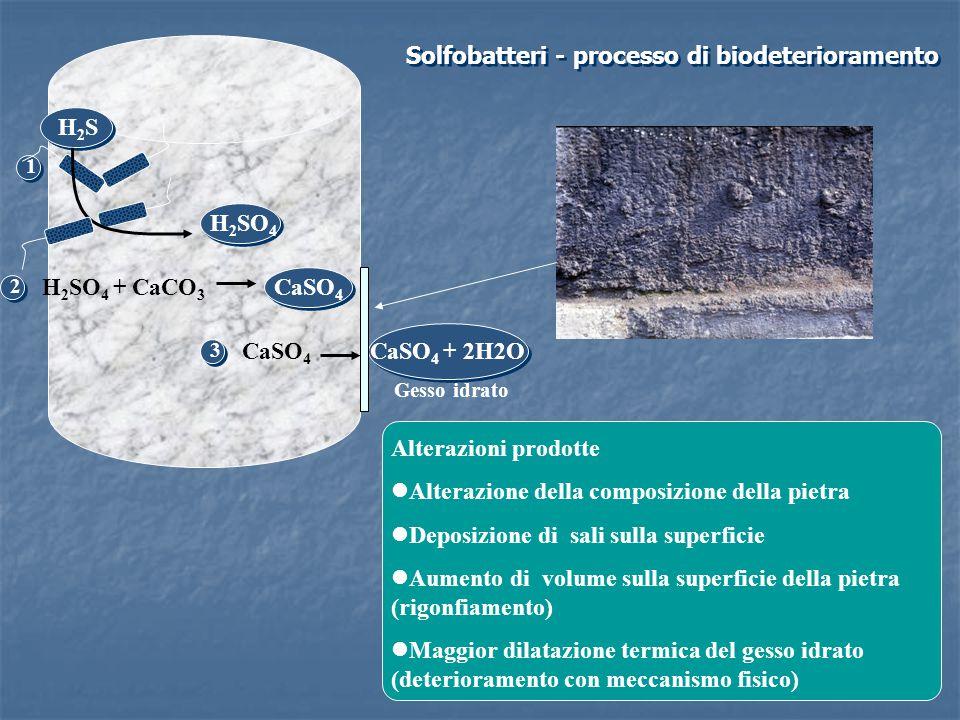 Solfobatteri - processo di biodeterioramento