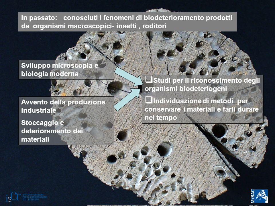 In passato: conosciuti i fenomeni di biodeterioramento prodotti da organismi macroscopici- insetti , roditori