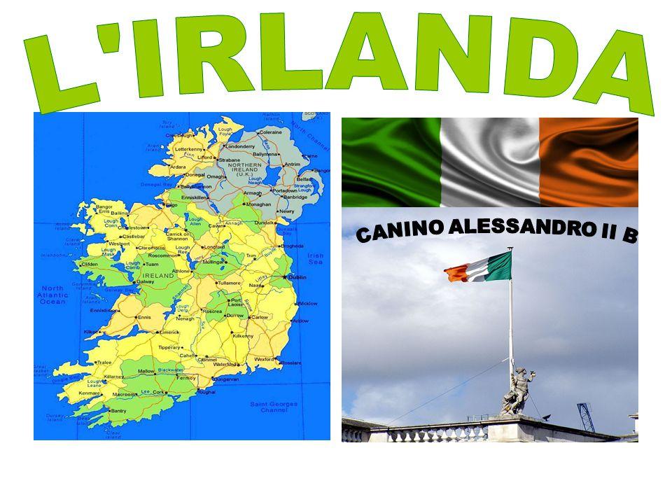 L IRLANDA CANINO ALESSANDRO II B