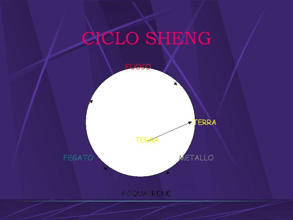 CICLO SHENG