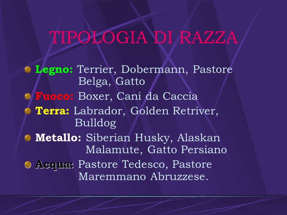 TIPOLOGIA DI RAZZA Legno: Terrier, Dobermann, Pastore Belga, Gatto