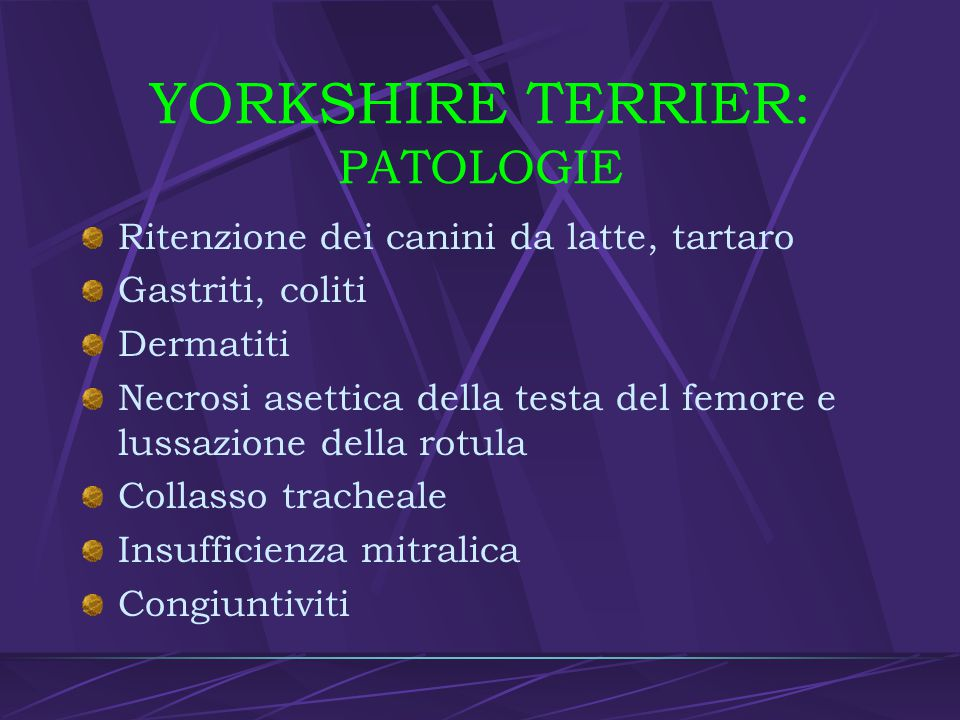 YORKSHIRE TERRIER: PATOLOGIE