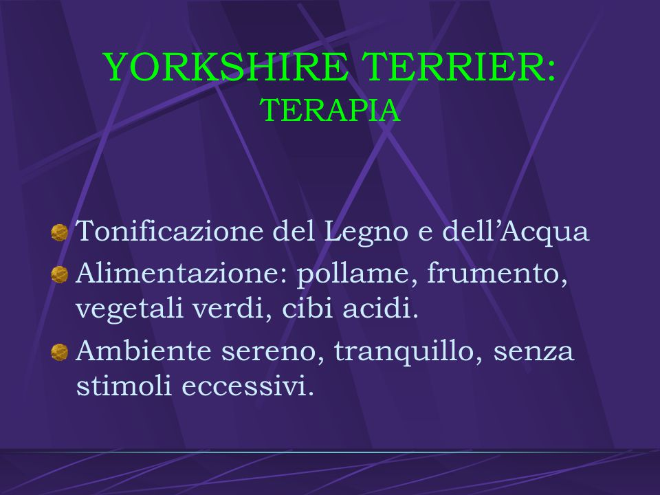 YORKSHIRE TERRIER: TERAPIA
