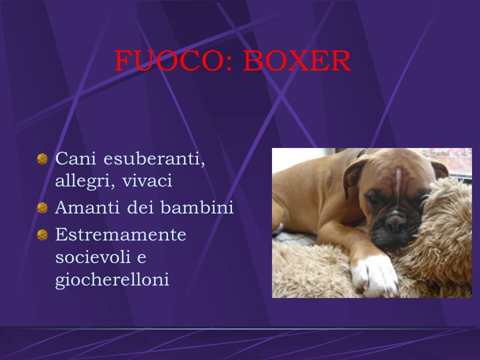 FUOCO: BOXER Cani esuberanti, allegri, vivaci Amanti dei bambini