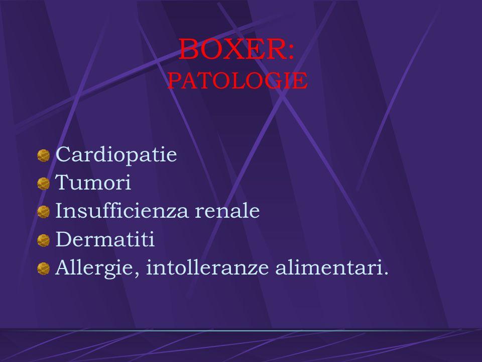 BOXER: PATOLOGIE Cardiopatie Tumori Insufficienza renale Dermatiti
