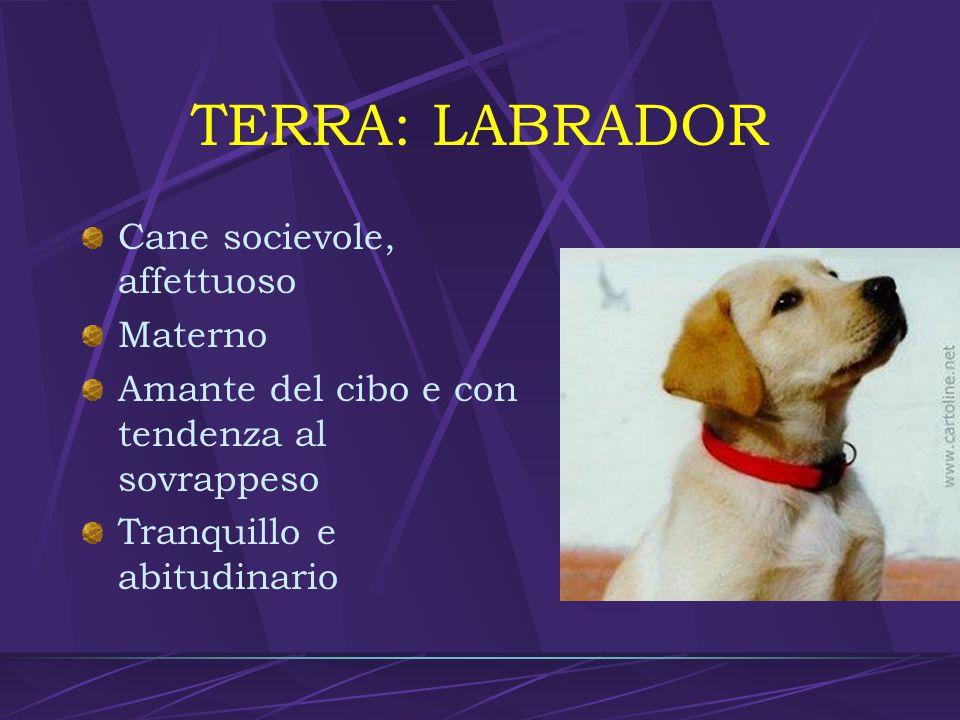 TERRA: LABRADOR Cane socievole, affettuoso Materno