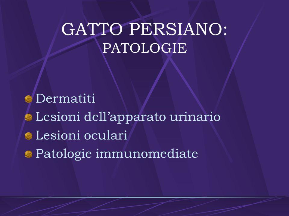 GATTO PERSIANO: PATOLOGIE