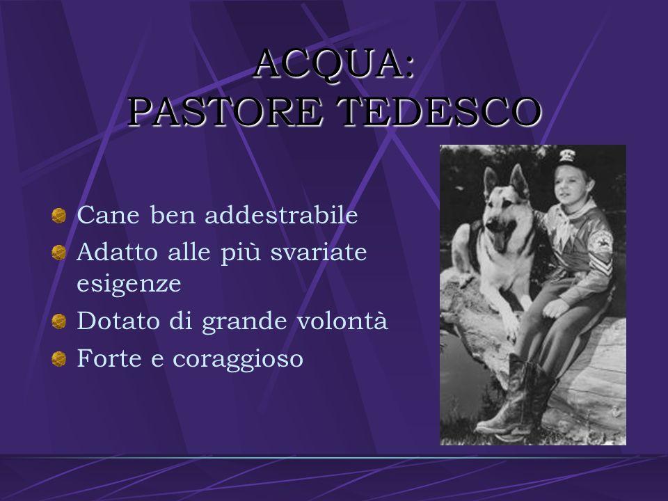 ACQUA: PASTORE TEDESCO
