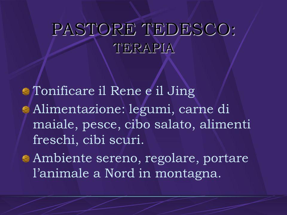 PASTORE TEDESCO: TERAPIA