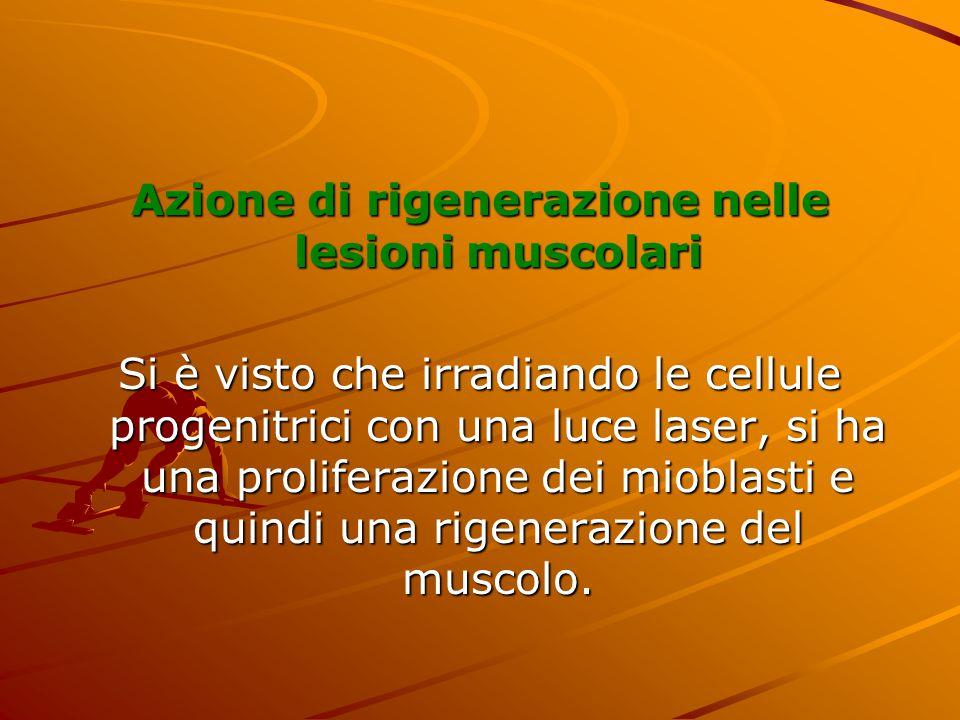Azione di rigenerazione nelle lesioni muscolari