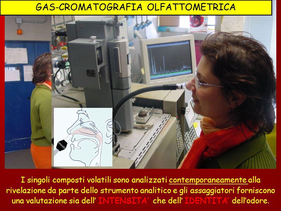 GAS-CROMATOGRAFIA OLFATTOMETRICA
