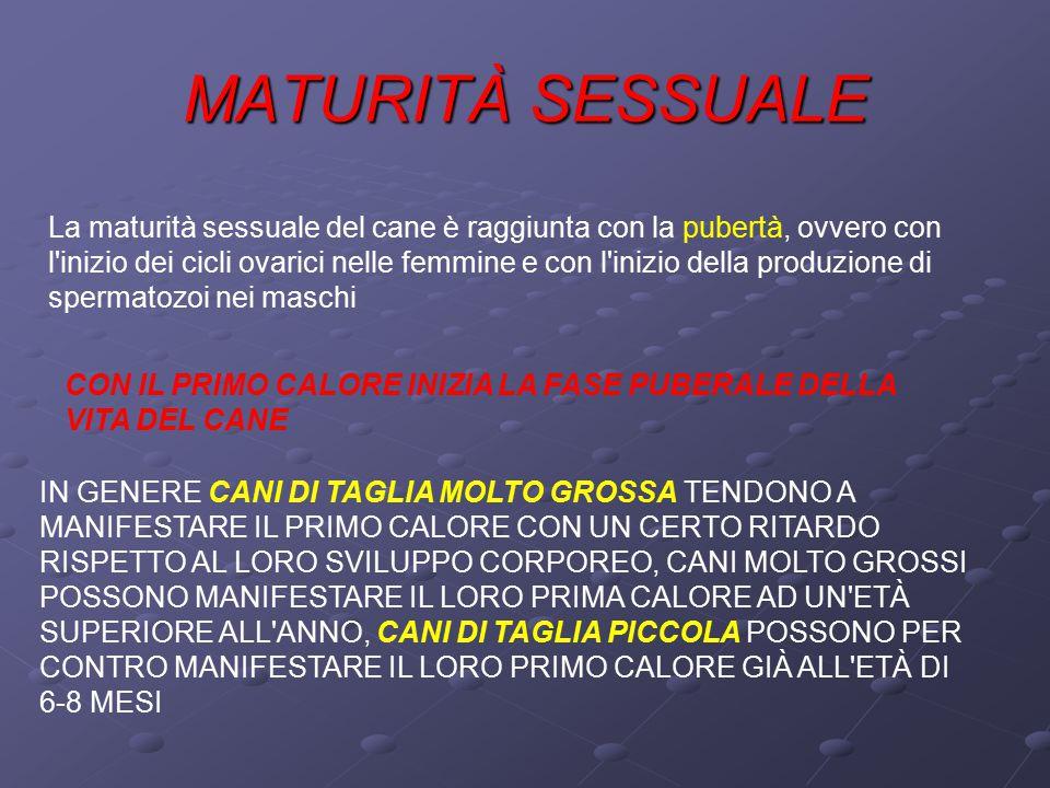 MATURITÀ SESSUALE