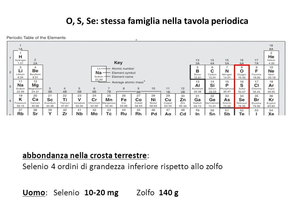 O, S, Se: stessa famiglia nella tavola periodica