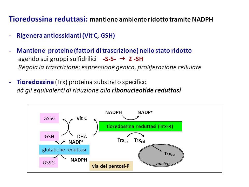 tioredossina reduttasi (Trx-R)