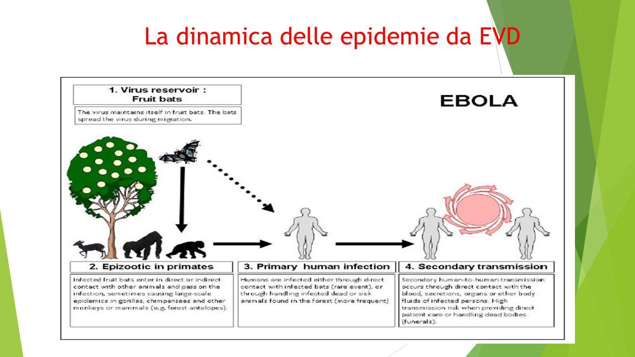 La dinamica delle epidemie da EVD
