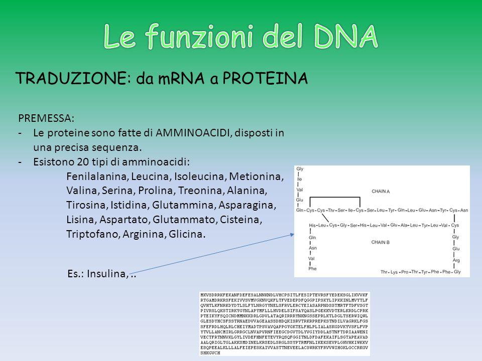Le funzioni del DNA TRADUZIONE: da mRNA a PROTEINA PREMESSA:
