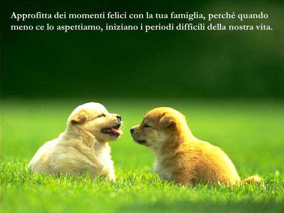 Approfitta dei momenti felici con la tua famiglia, perché quando meno ce lo aspettiamo, iniziano i periodi difficili della nostra vita.
