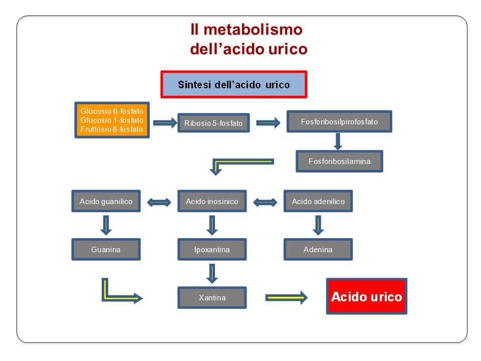Il metabolismo dell'acido urico