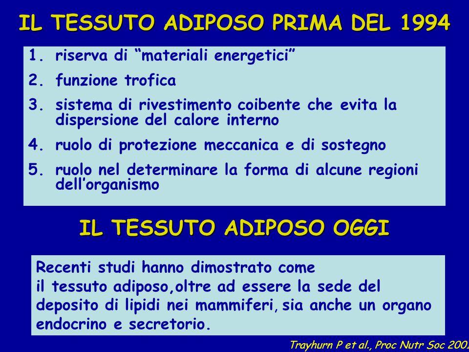 IL TESSUTO ADIPOSO PRIMA DEL 1994