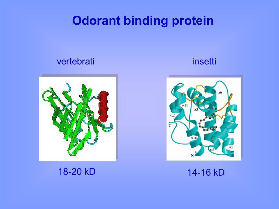 Odorant binding protein
