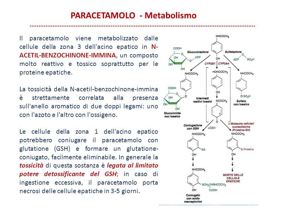 PARACETAMOLO - Metabolismo