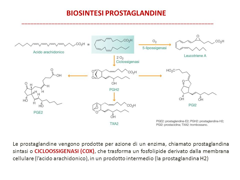 Biosintesi prostaglandine