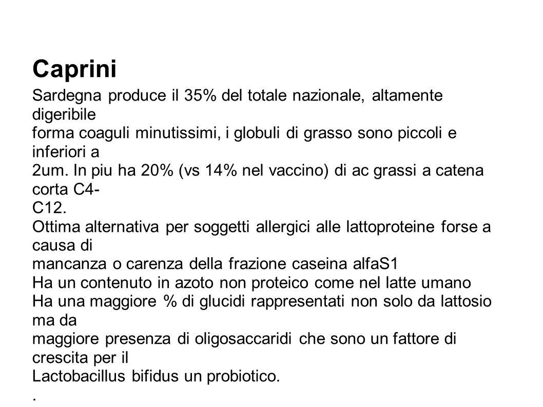 Caprini Sardegna produce il 35% del totale nazionale, altamente digeribile.